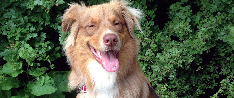 Happy-Dog-Timmys-Welt-Hundefutter-Nassfutter-Bio-getreidefrei-Anifit-01