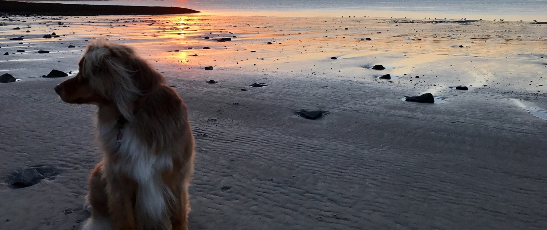 Happy-Dog-Timmys-Welt-Hundefutter-Nassfutter-Bio-getreidefrei-Anifit-04