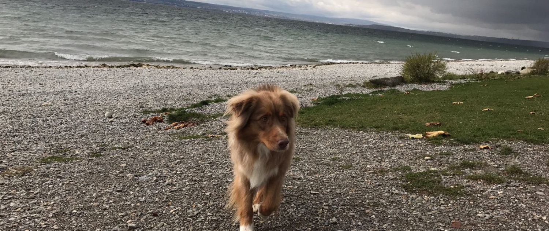 Happy-Dog-Timmys-Welt-Hundefutter-Nassfutter-Bio-getreidefrei-Anifit-05