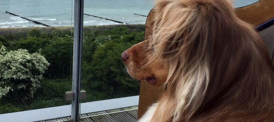 Happy-Dog-Timmys-Welt-Hundefutter-Nassfutter-Bio-getreidefrei-Anifit-07