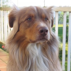 Happy-Dog-Timmys-Welt-Hundefutter-Nassfutter-Bio-getreidefrei-Anifit-Logo
